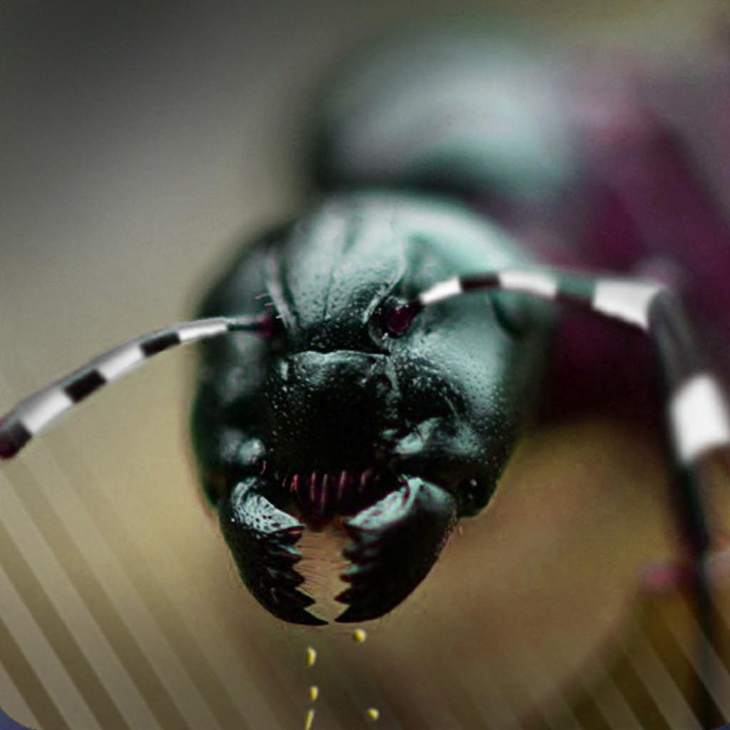 Ant Splat Madness hack