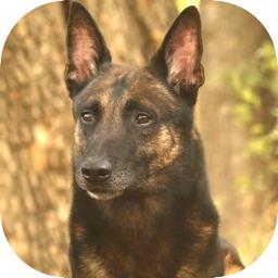 UKC Rally Dog Obedience