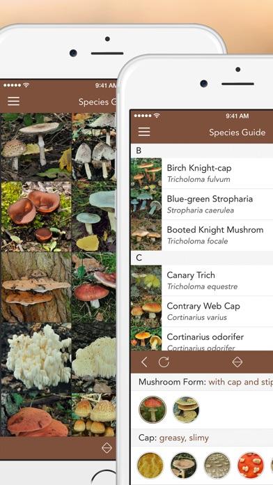 Mushrooms Pro review screenshots