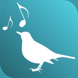 Amsel - Build up your Voice