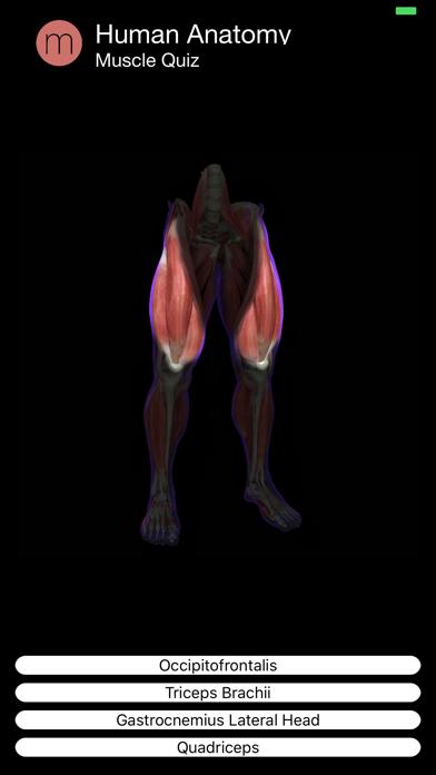 Muscle Quiz Screenshot 4