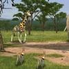 Cohérence cardiaque: le safari - iPhoneアプリ