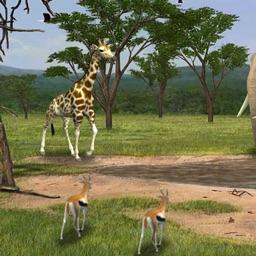 Cardiac Coherence: Safari