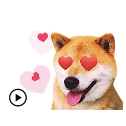 Adorable Shiba Inu Dog Sticker