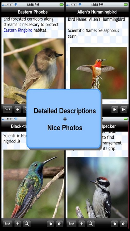 Birds Encyclopedia