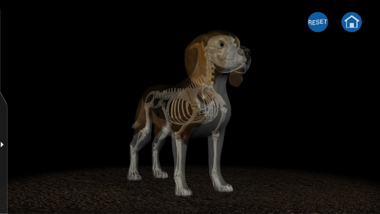 Osteology in Dogs (Ad Version)