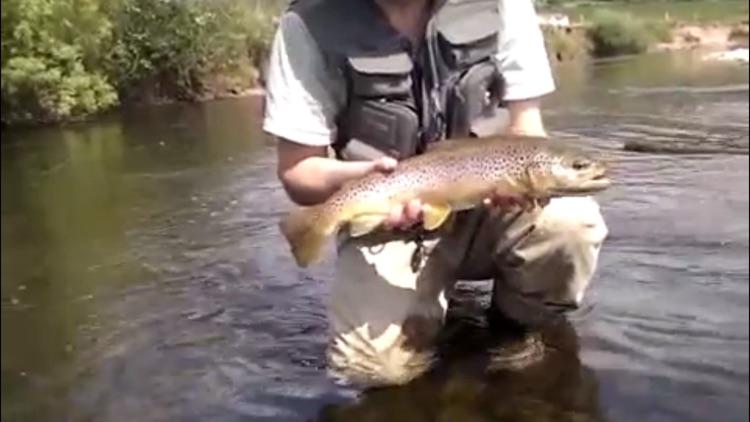 River Fishing screenshot-4