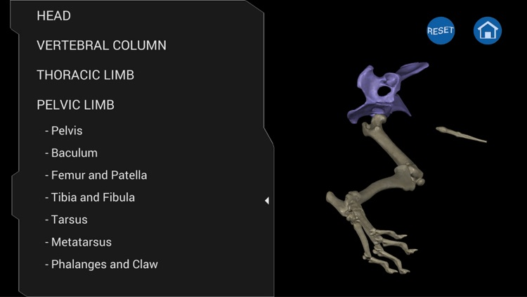Osteology in Dogs (Ad Version) screenshot-4