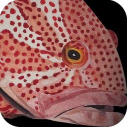 Hong Kong Fish