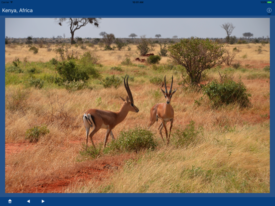 Kenya, Africa screenshot 8
