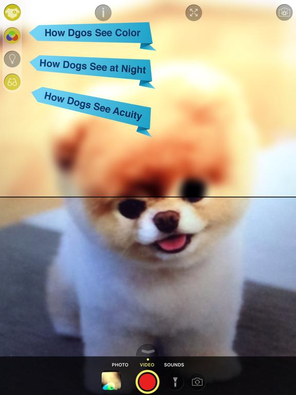 Dog Vision HD screenshot 6