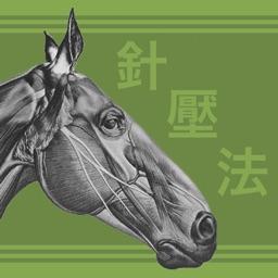 Equine AcuPoints