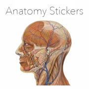 Anatomy Stickers