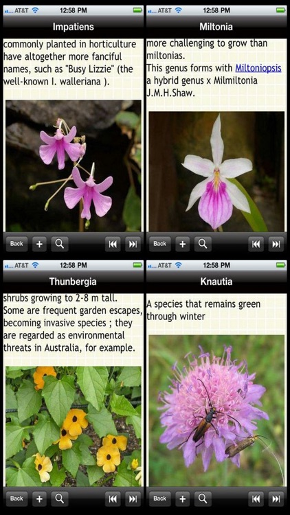 Garden Plants Bible