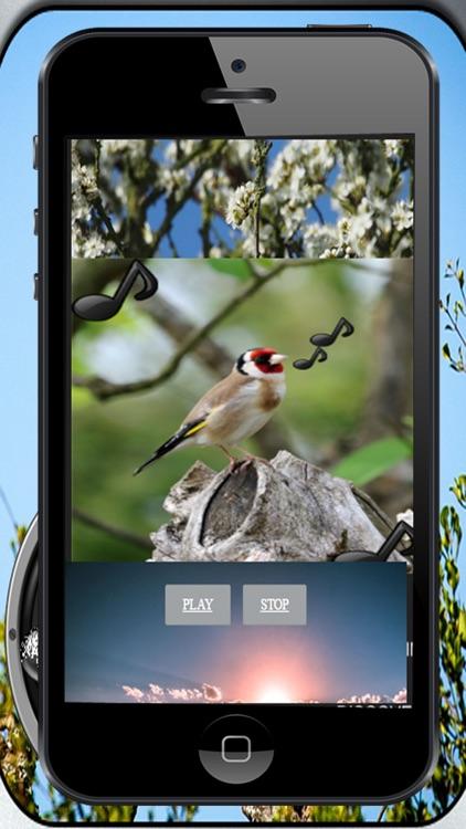 Bird song Silvestes
