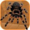 Spider Scare Prank - Magic Spider