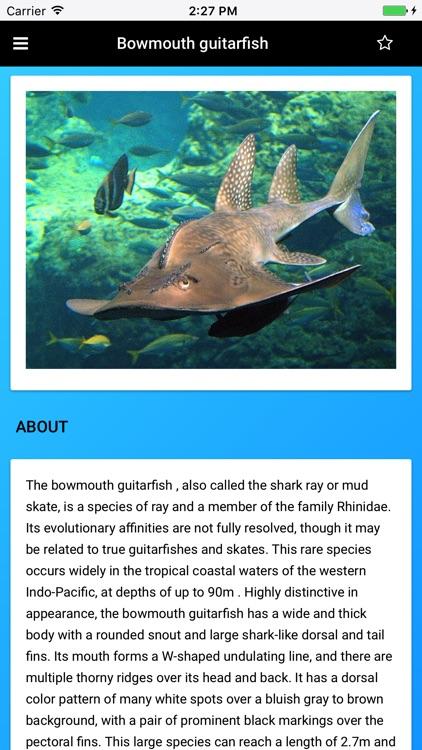 Stingray Species: Rays of the Ocean