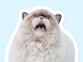 This is a modest, and yet dank compilation of cat stickers for iMessage