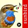 Canzoni d'uccelli, versi di richiamo degli uccelli