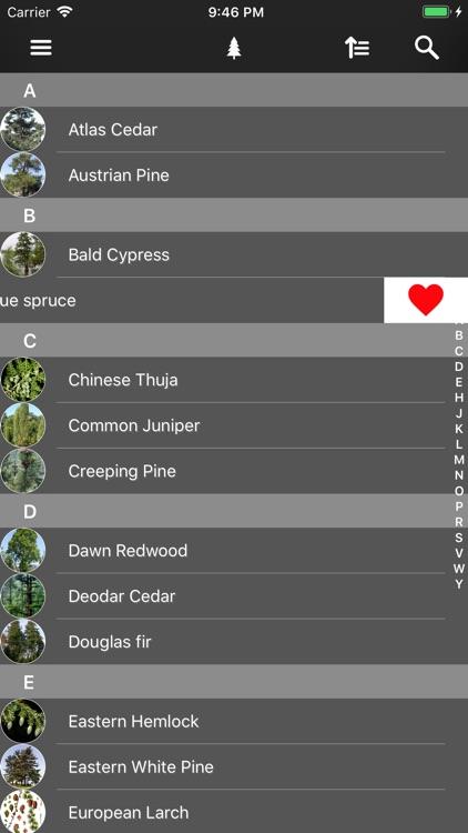 Conifers screenshot-4