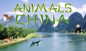 Animals China
