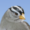 App Icon for iBird Yard+ Guide to Birds App in Brazil IOS App Store