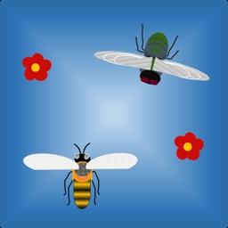 Bee vs Fly