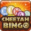 Cheetah Bingo