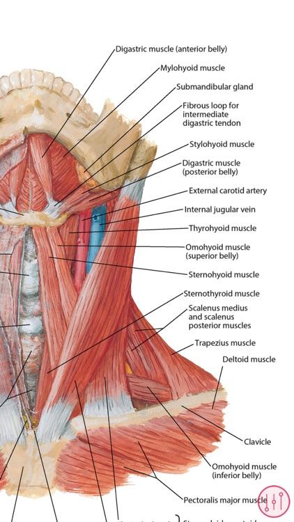Netters Anatomy Atlas Bundle By Skyscape Medpresso Inc