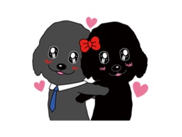 Black poodle' happy life with friends