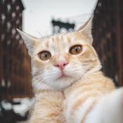 Selfie Cat Camera