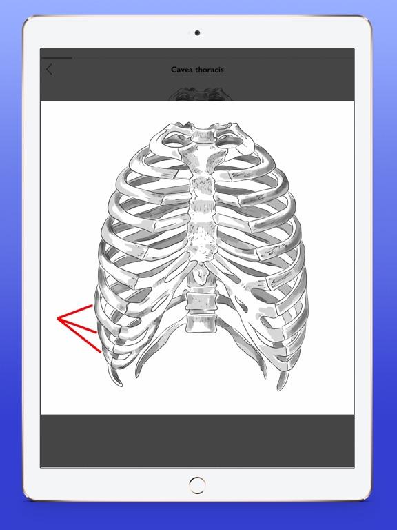 Osteology Screenshots