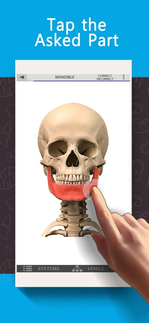 Anatomy Game Anatomicus Lite on the App Store