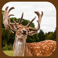 Codes for Extreme Stag Simulator 3D Hack