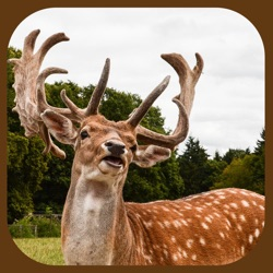 Extreme Stag Simulator 3D