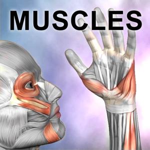 Learn Muscles: Anatomy app