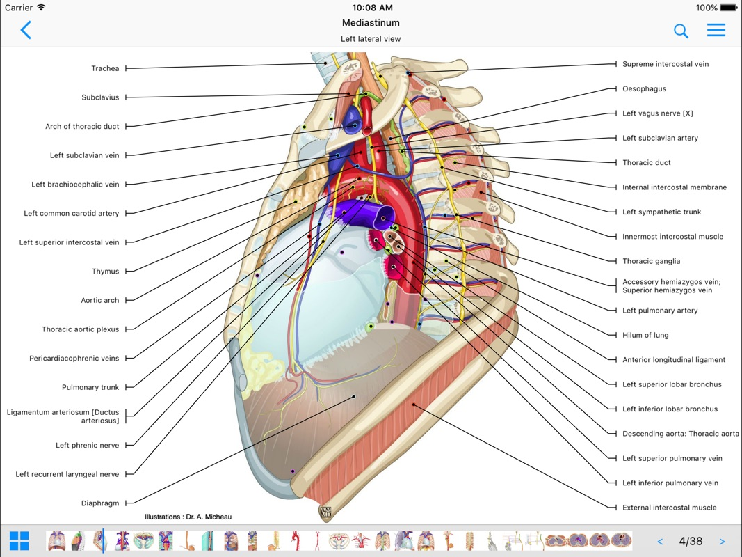 3 Minutes to Hack IMAIOS e-Anatomy - Unlimited | No Need to Download
