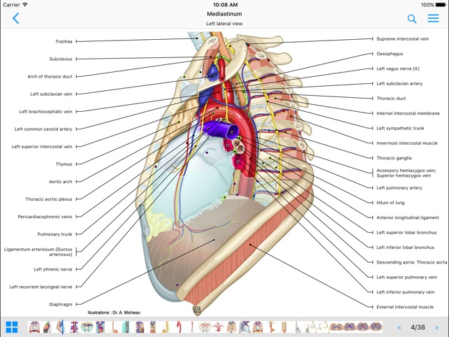 Imaios E Anatomy On The App Store