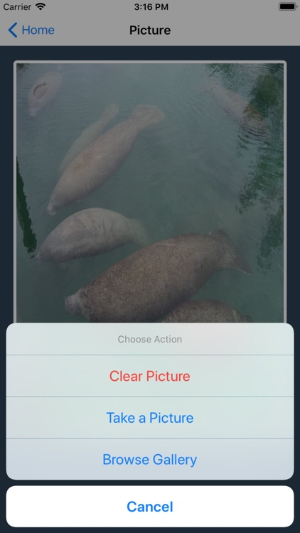 I Spy a Manatee screenshot-1