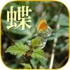 蝶の生態写真図鑑 - iPhoneアプリ