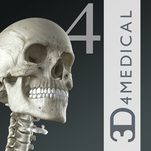 Essential Skeleton 4