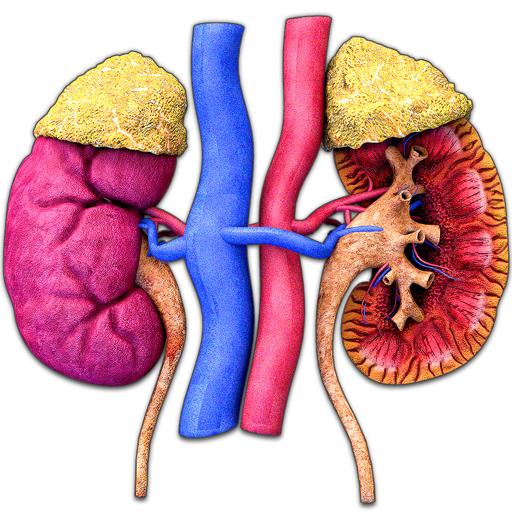 Kidney Motion