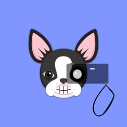 Boston Terrier Photo Booth