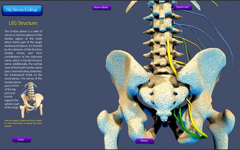 Hip Nerves Ending скриншот программы 5