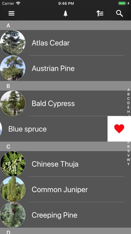 Conifers screenshot-8