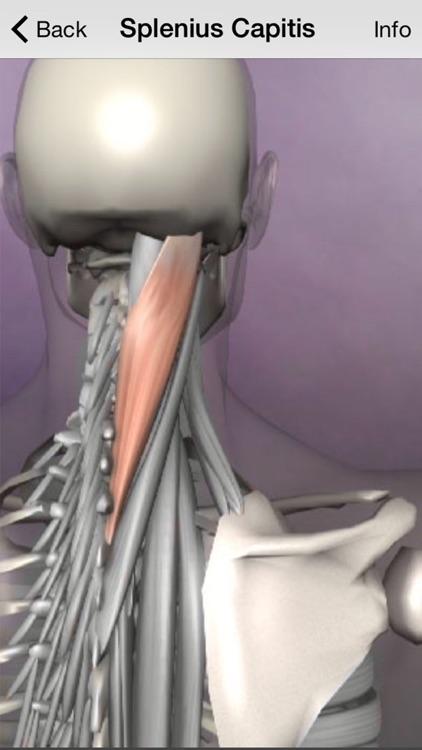 Learn Muscles: Anatomy screenshot-3
