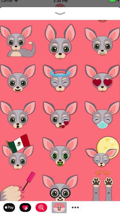 Blue Tan Chihuahua screenshot-3