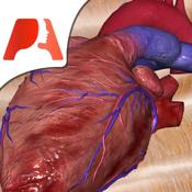 Pocket Heart app review