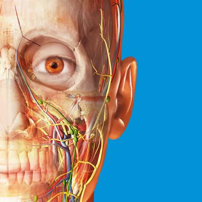 Human Anatomy Atlas 2018 - Complete 3D Human Body Applications