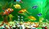 Aquarium on TV